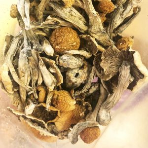 Buy MEXICAN CUBENSIS SHROOMS online Canada
