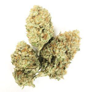 Buy HASH PLANT (BULK) online Canada
