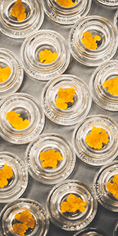 Buy WHITE WIDOW LIVE RESIN (SATIVA) online Canada