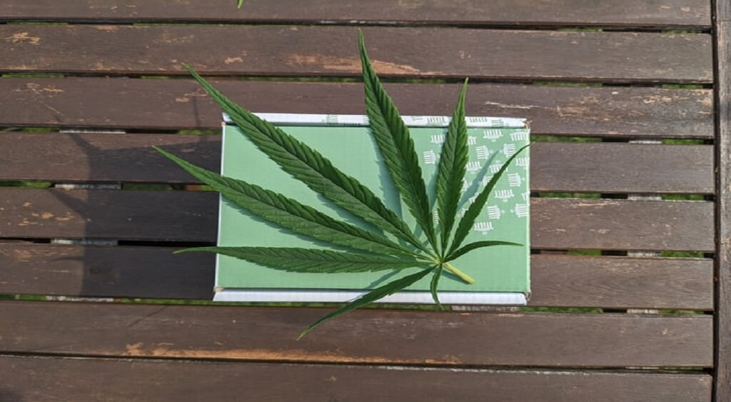 Why Marijuana Should be Legal   Low Price Bud